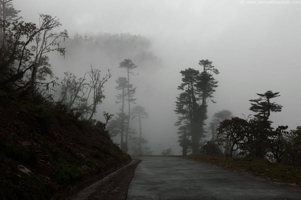 misty roads at pele la, bhutan.