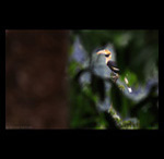 Great Honrbill in Forest fine art prints india